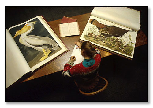 Student with two volumes from an elephant folio edition of John James Audubon's Birds of America. <br>Special Collections, John Hay Library, Brown University, Providence, Rhode Island. October 1987.